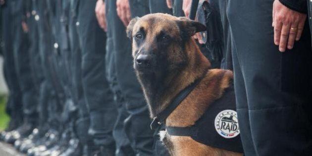 Diesel, chienne d'assaut du Raid, tuée dans l'offensive lancée à