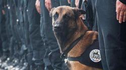 Diesel, une chienne d'assaut du Raid, tuée dans l'offensive à