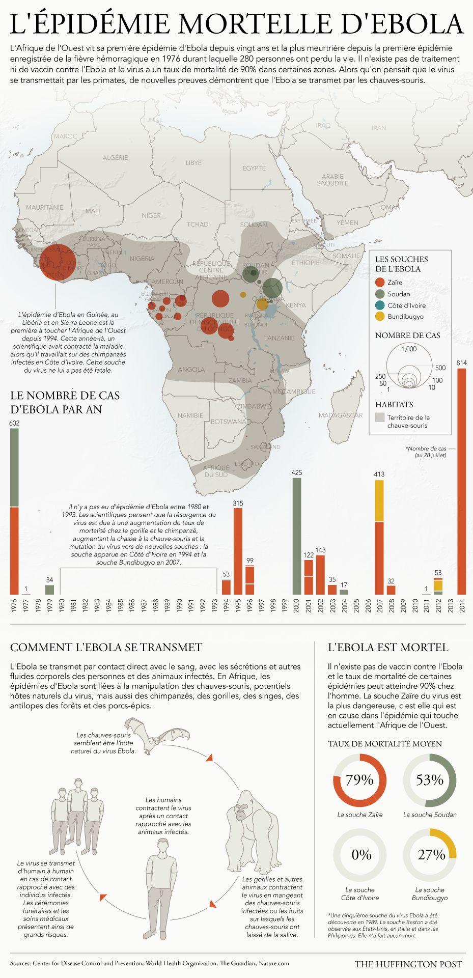 Virus Ebola : transmission, traitement, pays concernés, le point sur l'épidémie en une