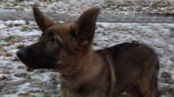 La Russie va offrir cet adorable petit chien à la