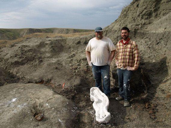 PHOTO. Un nouveau dinosaure de la famille des tricératops découvert au