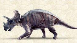 Voici Wendicératops, nouveau dinosaure découvert au