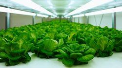 Toshiba va vendre des légumes fabriqués dans une usine aseptisée au