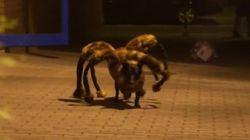 Caméra cachée de l'enfer avec un chien déguisé en araignée