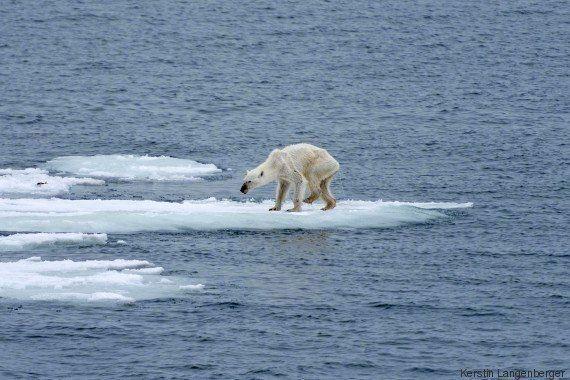 Ours polaire: l'auteure de la photo qui a fait le tour du monde lance un appel contre le