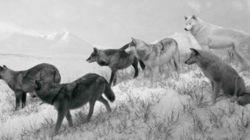 La curieuse exposition animalière que propose la Fondation