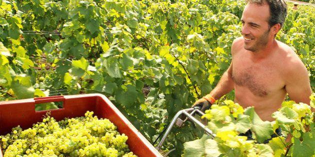 Le vrai (et le faux) des conséquences du réchauffement climatique sur la vigne et les