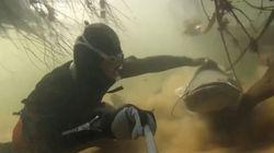Plongée dans la Loire, au milieu des poissons