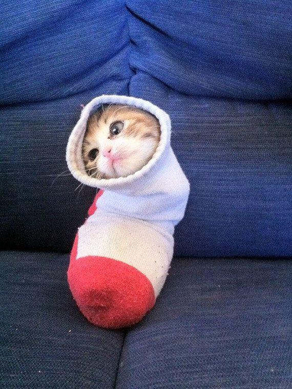 PHOTOS. Ce chat dans une chaussette, détourné, a fait le bonheur des