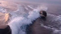 Des dauphins derrière un bateau, c'est mignon. Des orques, un peu