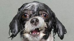Les chiens face à leur pire ennemi: