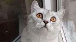 N'essayez pas de faire détourner les yeux à ce chat, vous allez
