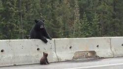 Une mère sauve son ourson bloqué sur le bord d'une