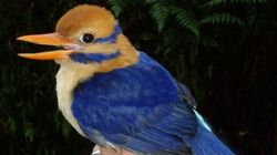 Un oiseau rarissime photographié pour la première