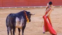 Un torero meurt après un coup de corne en pleine