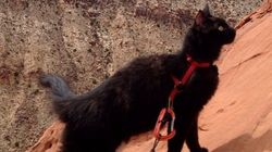 Ce chat est un alpiniste