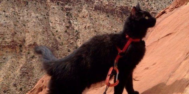 Emmener son chat en voyage: aucun problème pour Millie, le chat randonneur et alpiniste de Craig