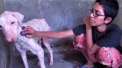 VIDÉO. Animaux abandonnés: l'émouvante transformation d'un chien sauvé par un