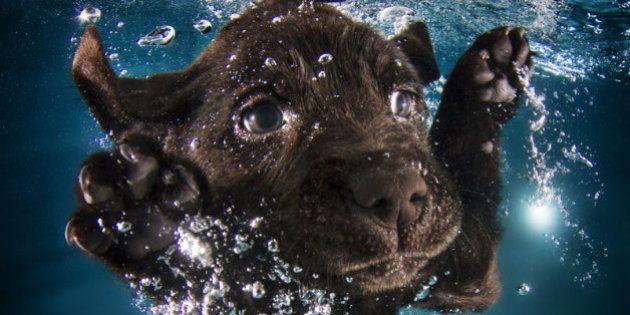 PHOTOS. Des chiots sous l'eau dans une nouvelle série de Seth