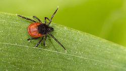 Le cri d'alarme de 100 médecins sur la maladie de Lyme: