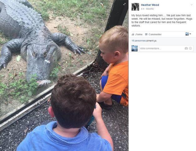 Un crocodile victime d'une crise cardiaque reçoit les gestes de premiers