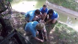 Un crocodile reçoit les gestes de premiers