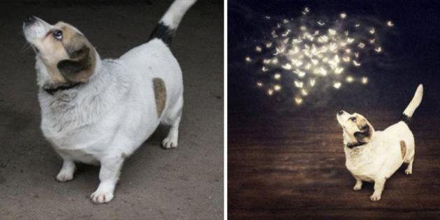 PHOTOS. Elle retouche des photos de chiens abandonnés pour les aider à être