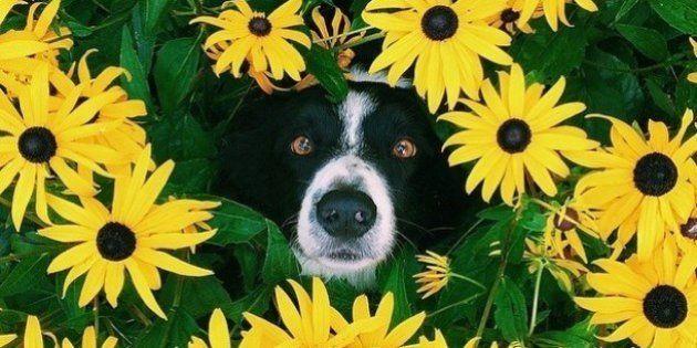 PHOTOS. Ce chien aime beaucoup se cacher, son maître le photographie façon