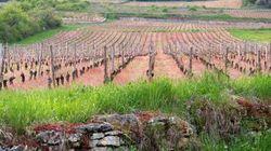 La Bourgogne honore ses crémants pour leur 40e