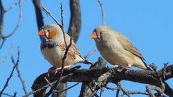 Ce couple d'oiseaux discute pour savoir qui s'occupera des