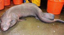 Mais quelle est cette créature marine étrange observée en