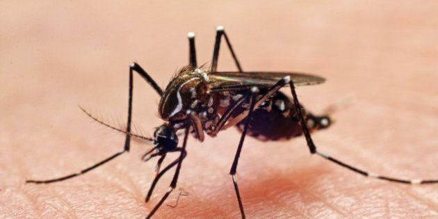 La dengue arrive en France avec un premier cas signalé dans le