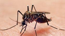 La dengue arrive en