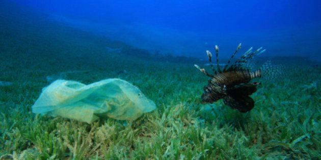 L'expédition MED, « stop à la pollution au plastique