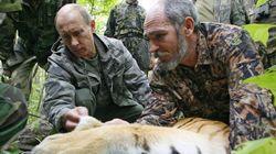 Deux tigres relâchés par Poutine font du grabuge en
