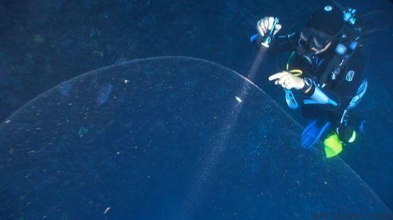 VIDÉO. Des plongeurs ont découvert une étrange sphère gélatineuse au large de la