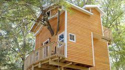 Cette cabane dans les arbres va vous faire retomber en