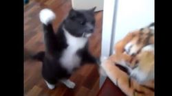 Ce chat en veut (beaucoup) à ce