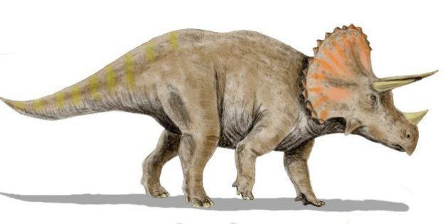 Nouveau dinosaure venu du continent perdu de Laramidia découvert, le Nasutoceratops