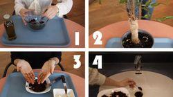 Quatre façons de recycler son marc de