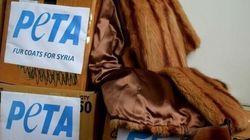 Des manteaux de fourrure distribués aux migrants de