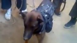 Un chien militaire pris en otage par des talibans