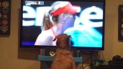Ce chien est le plus grand fan de Sharapova au