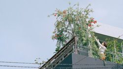 Plantation sur les toits, futur de l'agriculture et de