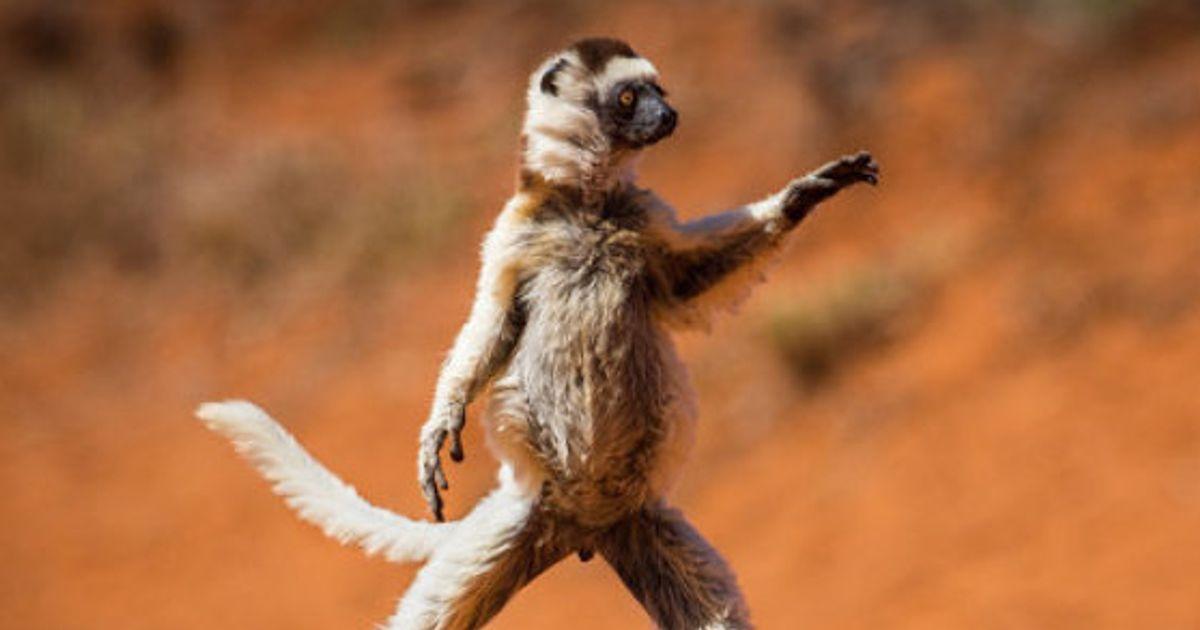 PHOTOS. Ce concours de photos d'animaux drôles est un vrai bêtisier de la nature | Le HuffPost
