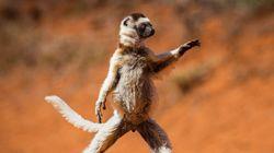 PHOTOS. Ce concours de photos d'animaux drôles est un vrai bêtisier de la