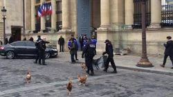 Lâcher de poules de la Manif pour tous à l'Assemblée: 4