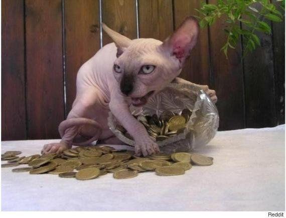 PHOTOS. Un chat gardant un sac en plastique rempli de pièces d'or détourné sur