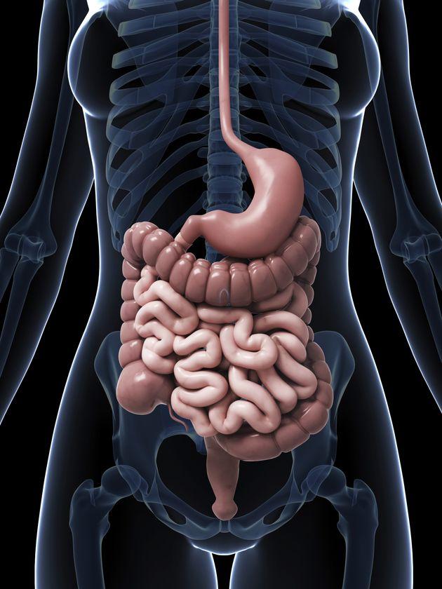 Problème de digestion? Voici ce qu'il se passe dans votre ...