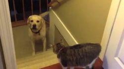 Ces chats feraient de bons (mais cruels)